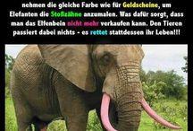 Der Wolf Und Die Sieben Geißlein Ausmalbild Inspirierend Eva Wolf Baswol71 Auf Pinterest Bild
