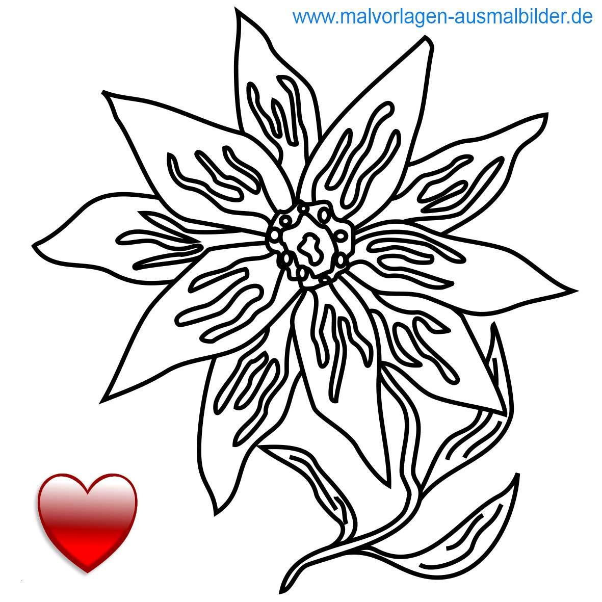 Diddl Maus Ausmalbilder Frisch Schone Ausmalbilder Blumen Alles über Wohndesign Und Möbelideen Stock
