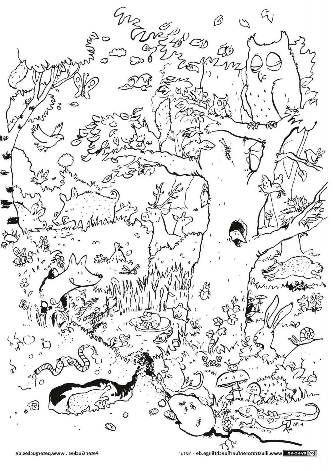 Dschungel Bilder Zum Ausdrucken Frisch 29 Inspirierend Dschungel Ausmalbilder – Malvorlagen Ideen Galerie