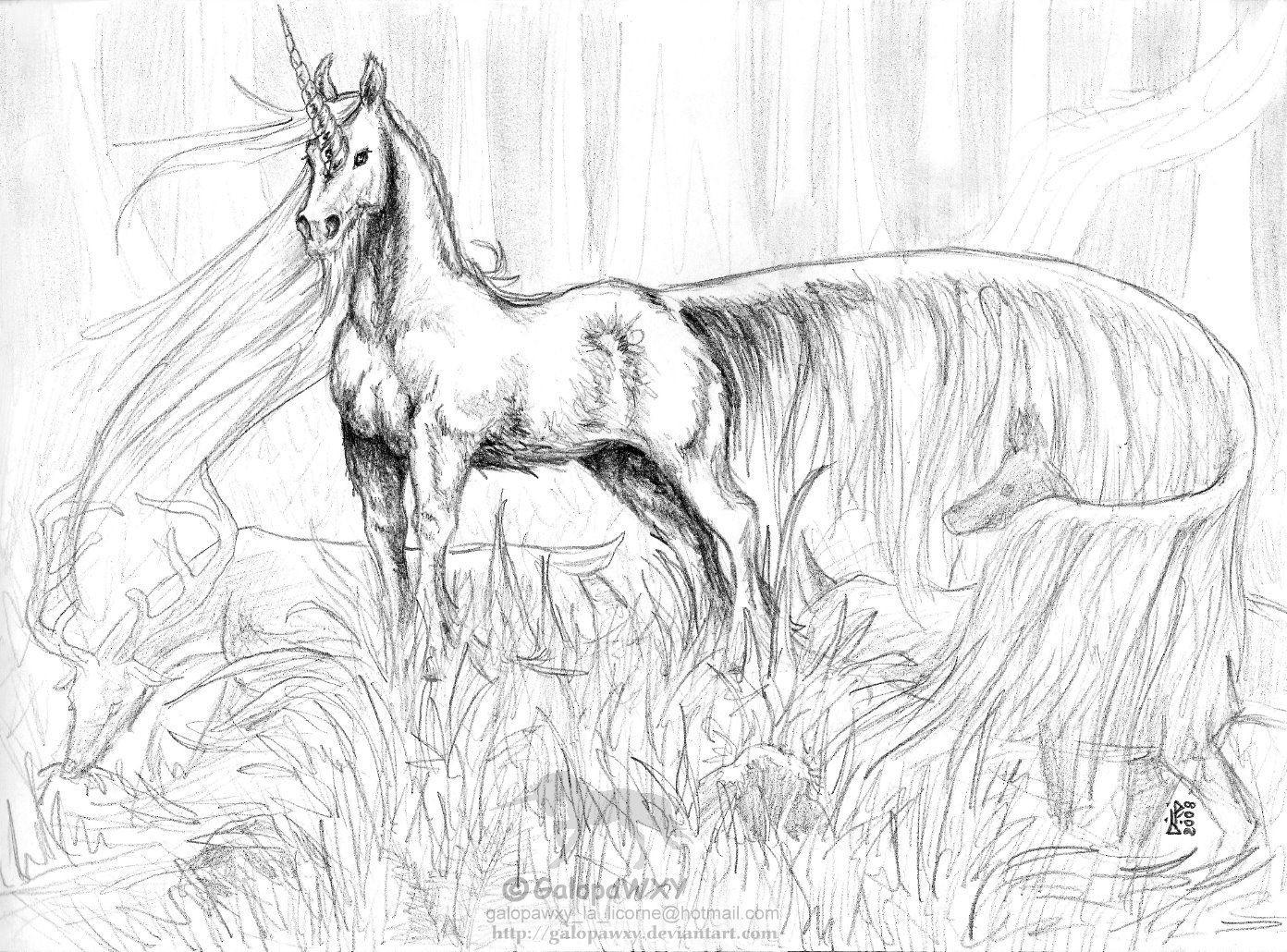 Einhorn Kopf Zum Ausmalen Frisch Einhornkopf Ausmalbilder Best Unicorn Coloring Pages Das Bild