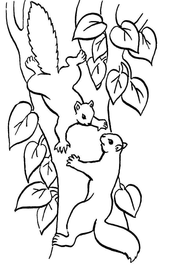 Erdmännchen Zum Ausmalen Inspirierend Eichhörnchen 11 Bilder Zum Ausmalen Sammlung