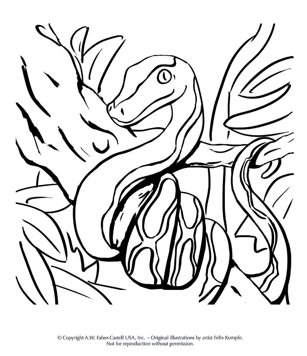 Eule Malvorlage Bunt Frisch Malvorlagen Tiermotive Bild
