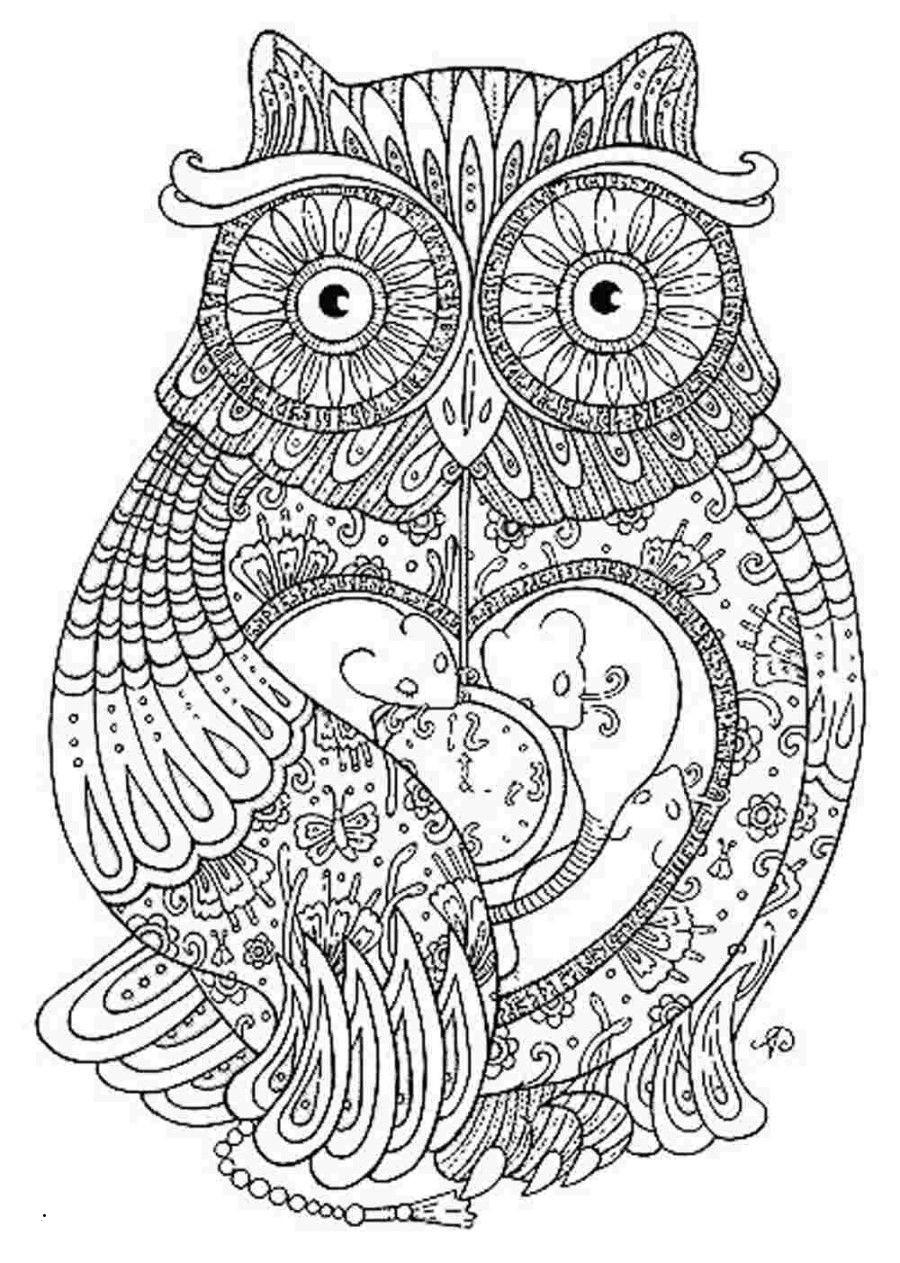 Eulen Zum Ausdrucken Frisch 40 Skizze Ausmalbilder Kostenlos Eulen Treehouse Nyc Das Bild