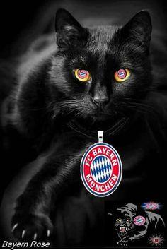 Fc Bayern Hintergrundbilder Inspirierend 191 Besten Fcb Bilder Auf Pinterest In 2018 Fotografieren