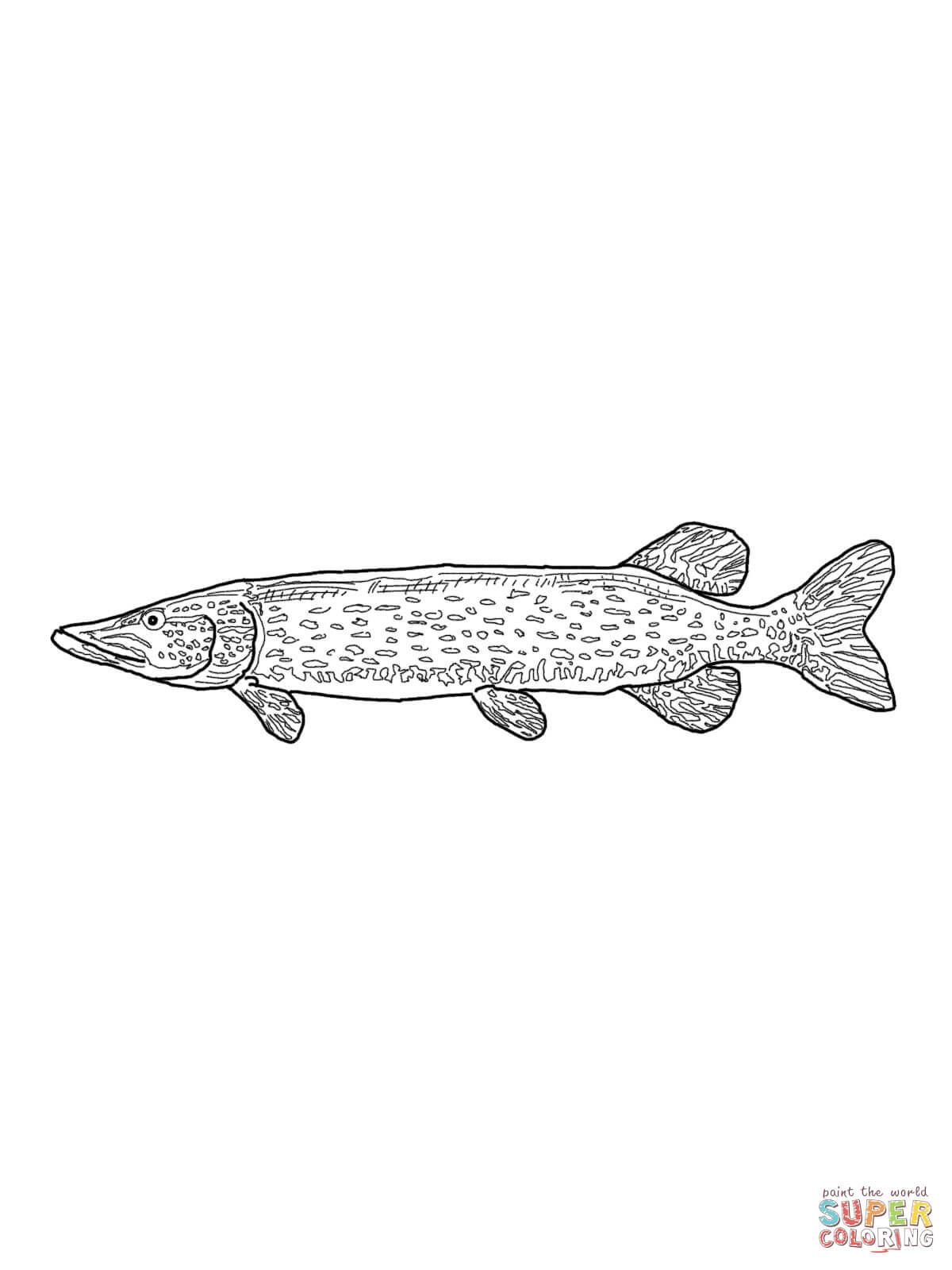 "Fische Bilder Zum Ausdrucken Frisch Pin by Myrto Tsakiraki ŽºŽŽ½""Ž·Ž¼Ž± Pinterest Einzigartig Fotos"