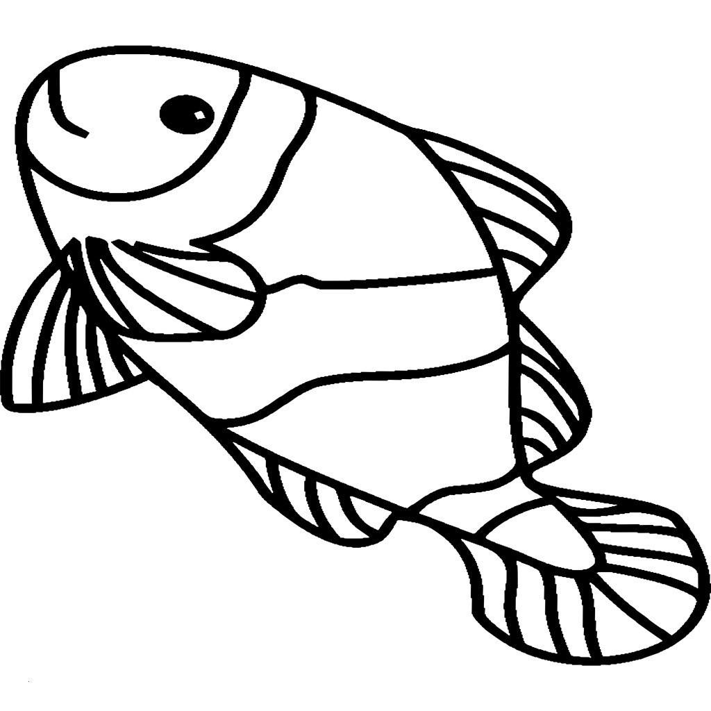 Fische Zum Ausmalen Und Ausdrucken Genial 35 Malvorlagen Fische Meerestiere Scoredatscore Einzigartig Bild