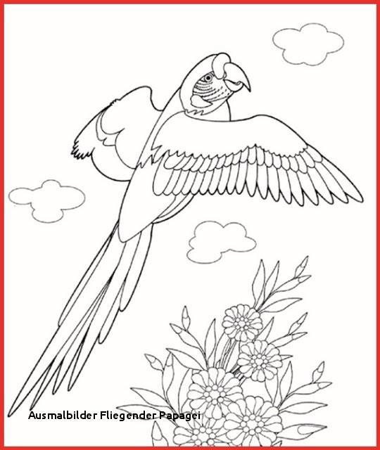 """Fliegender Papagei Malvorlage Das Beste Von Ausmalbilder Fliegender Papagei Ausmalbild Papagei"""" Stockfotos Und Fotos"""