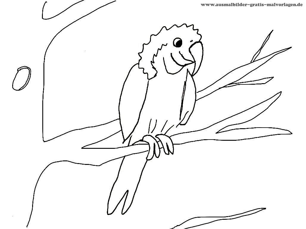Fliegender Papagei Malvorlage Das Beste Von Ausmalbilder Fliegender Papagei Schön 40 Ausmalbilder Papagei Das Bild