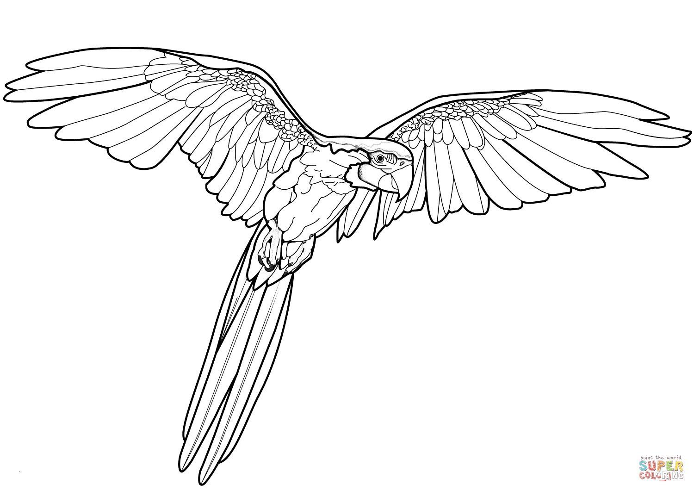 Fliegender Papagei Malvorlage Einzigartig Ausmalbilder Fliegender Papagei Genial Malvorlagen Igel Frisch Igel Bild