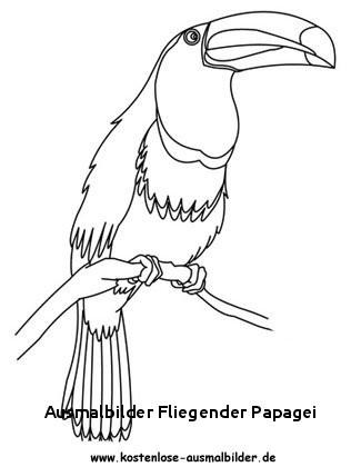 """Fliegender Papagei Malvorlage Frisch Ausmalbilder Fliegender Papagei Ausmalbild Papagei"""" Stockfotos Und Fotos"""