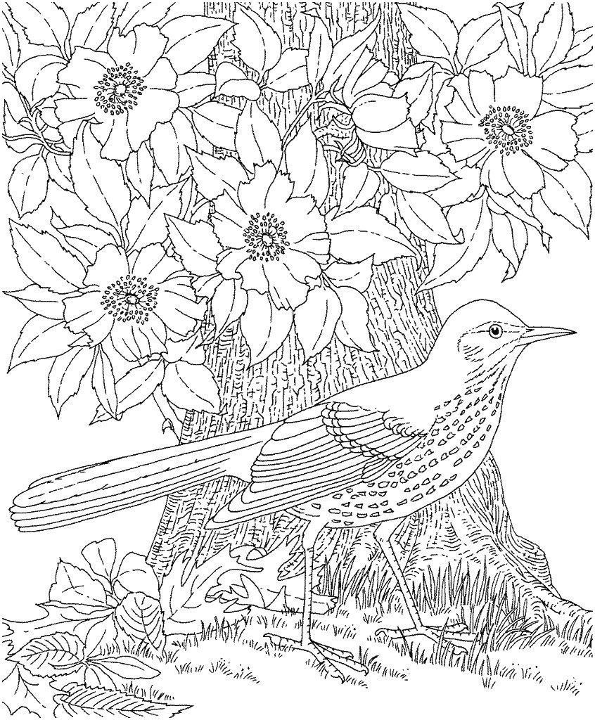 Fliegender Papagei Malvorlage Genial 42 Neu Papagei Ausmalen – Große Coloring Page Sammlung Stock