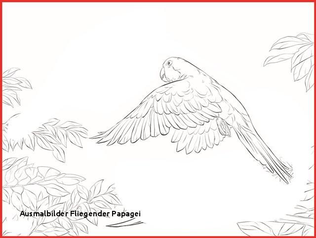 """Fliegender Papagei Malvorlage Genial Ausmalbilder Fliegender Papagei Ausmalbild Papagei"""" Stockfotos Und Bild"""
