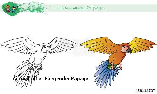 """Ausmalbilder Fliegender Papagei Ausmalbild Papagei"""" Stockfotos Und"""