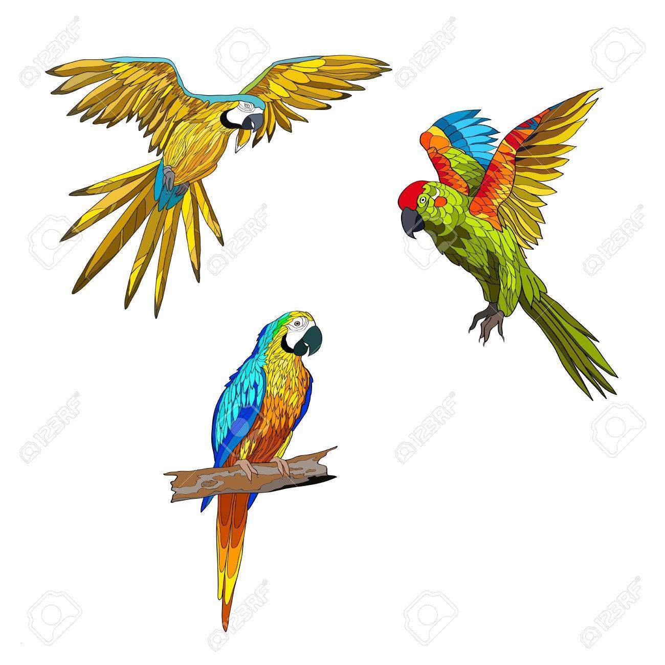 Fliegender Papagei Malvorlage Genial Ausmalbilder Fliegender Papagei Genial Malvorlagen Igel Frisch Igel Stock
