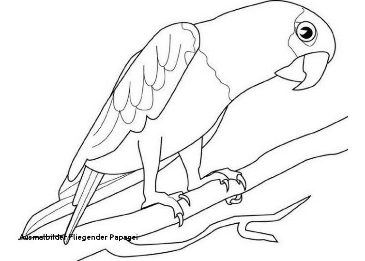 """Fliegender Papagei Malvorlage Inspirierend Ausmalbilder Fliegender Papagei Ausmalbild Papagei"""" Stockfotos Und Bilder"""
