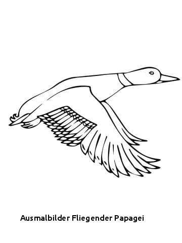 """Fliegender Papagei Malvorlage Inspirierend Ausmalbilder Fliegender Papagei Ausmalbild Papagei"""" Stockfotos Und Das Bild"""