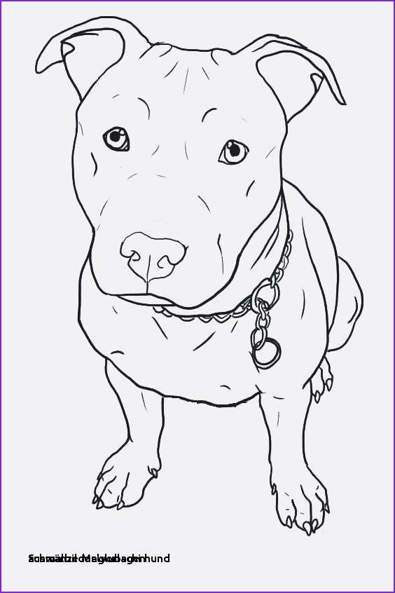 Glubschi Zum Ausmalen Das Beste Von 28 Ausmalbilder Glubschi Hund Colorbooks Colorbooks Bilder