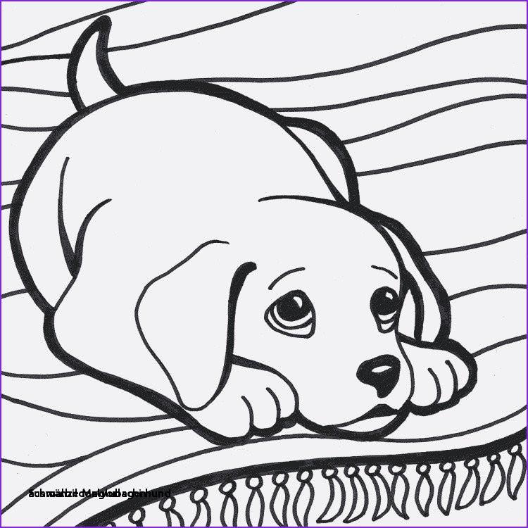 Glubschi Zum Ausmalen Genial 28 Ausmalbilder Glubschi Hund Colorbooks Colorbooks Sammlung