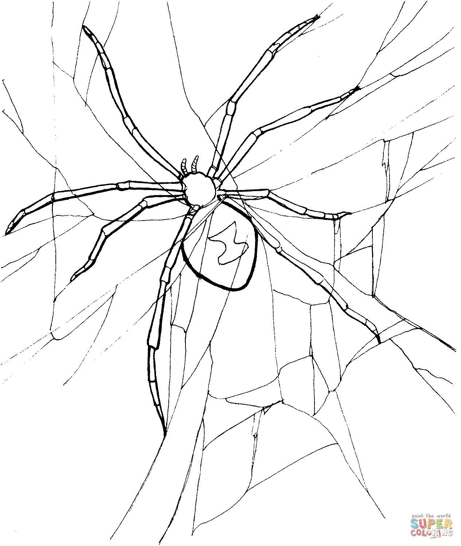 Halloween Ausmalbilder Spinne Das Beste Von Ausmalbilder Insekten Awesome Malvorlagen Igel Frisch Igel Bild