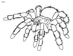 Halloween Ausmalbilder Spinne Frisch 319 Besten Ausmalbilder Bilder Auf Pinterest Das Bild