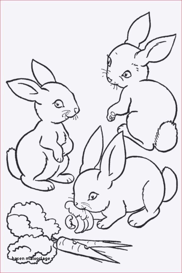 Hase Malen Vorlage Einzigartig 21 Hasen Malvorlage Colorbooks Colorbooks Galerie