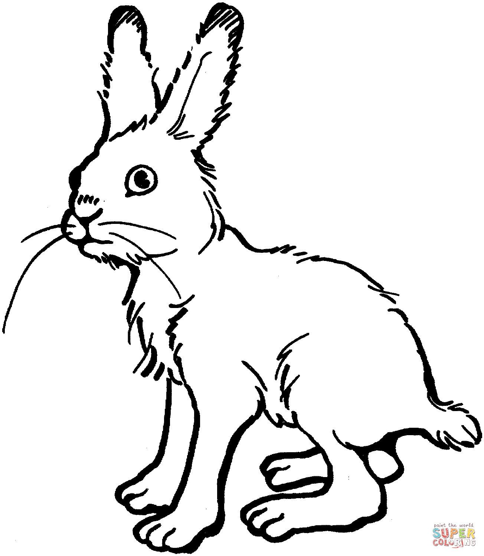 Hase Malen Vorlage Einzigartig 35 Malvorlagen Hasen forstergallery Stock