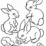 Hase Zum Ausdrucken Das Beste Von 34 Frisch Malvorlage Hase – Malvorlagen Ideen Das Bild