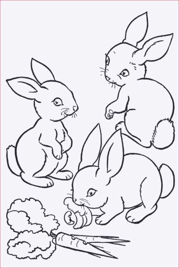 Hasen Bilder Zum Ausdrucken Kostenlos Das Beste Von Ausmalbilder Kaninchen Sammlung