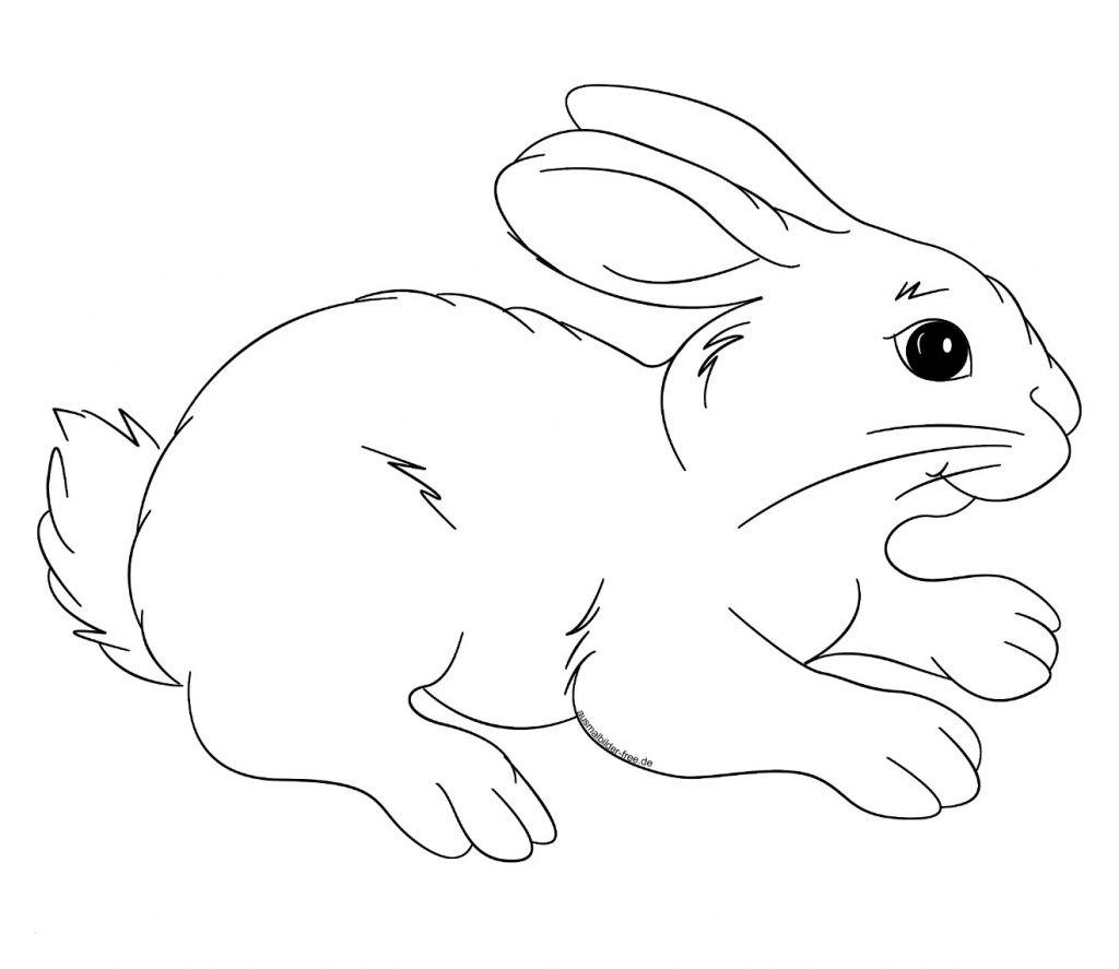 Hasen Bilder Zum Ausdrucken Kostenlos Frisch Druckbare Malvorlage Ausmalbilder Kaninchen Beste Druckbare Bilder