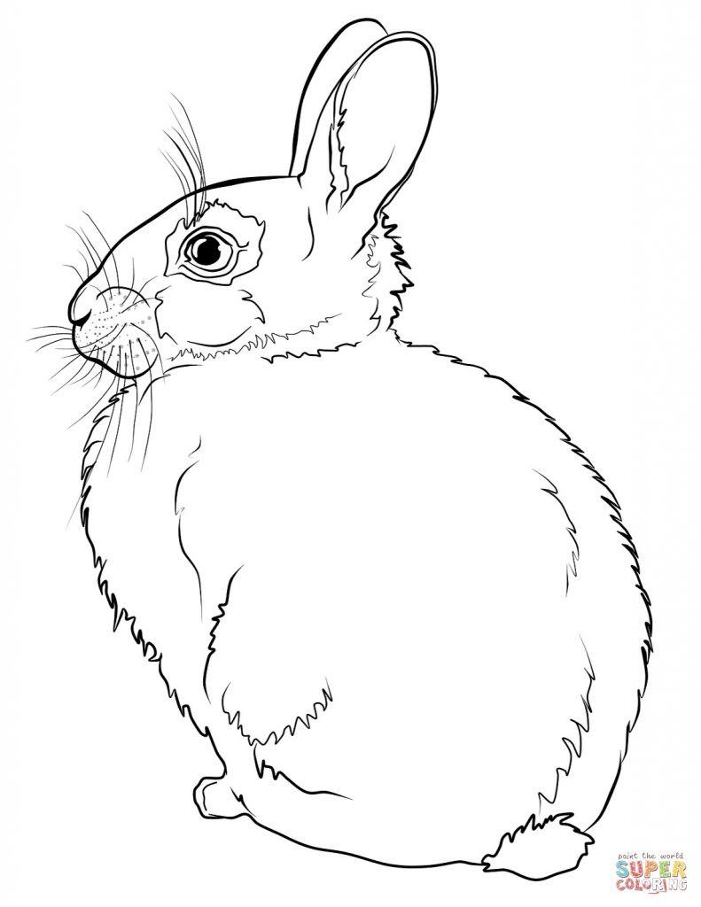 Hasen Bilder Zum Ausdrucken Kostenlos Frisch Druckbare Malvorlage Malvorlage Hase Beste Druckbare Malvorlagen Bild