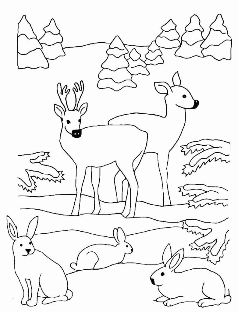 Hasen Bilder Zum Ausdrucken Kostenlos Inspirierend Hasen Bilder Zum Ausdrucken Kostenlos Fotos Designs Hirsche Und Sammlung