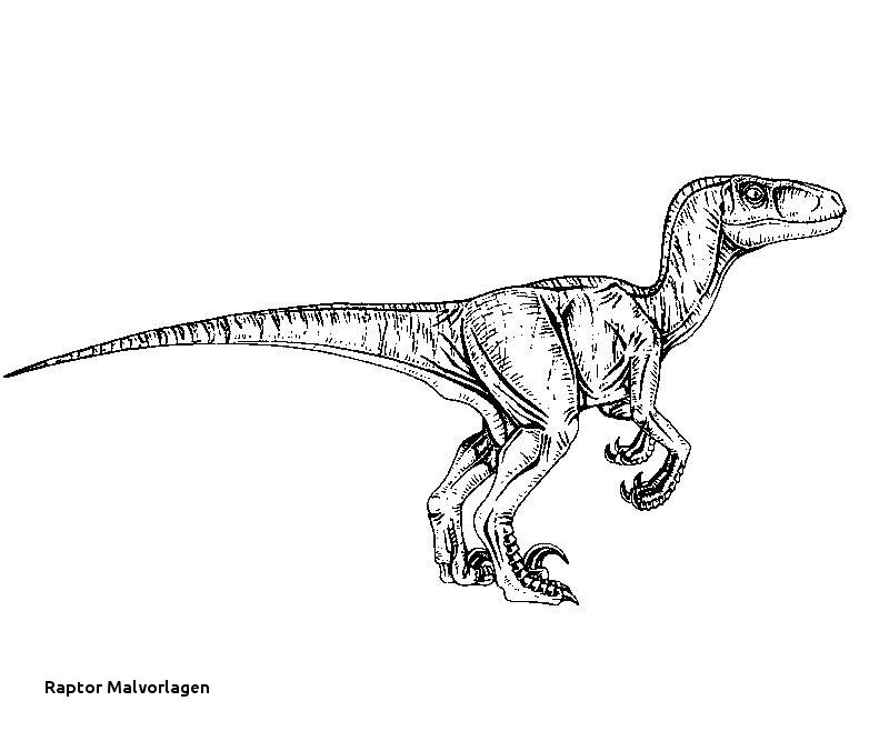 Jurassic Park Ausmalbilder Einzigartig 24 Raptor Malvorlagen Sammlung