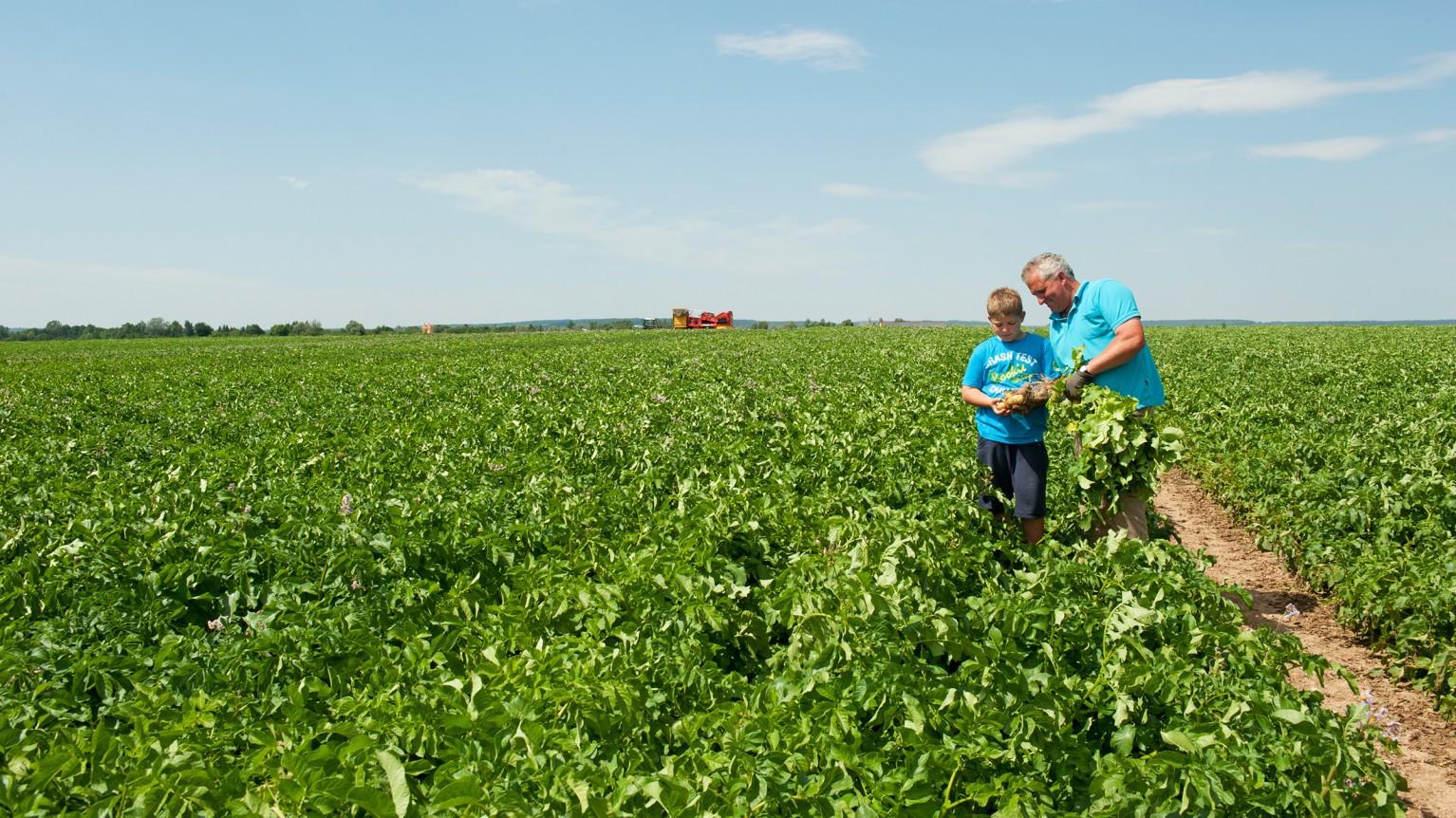 Kartoffel Bilder Zum Ausdrucken Inspirierend Position Zukunft Der Eu Agrarpolitik Nach 2020 Fotografieren