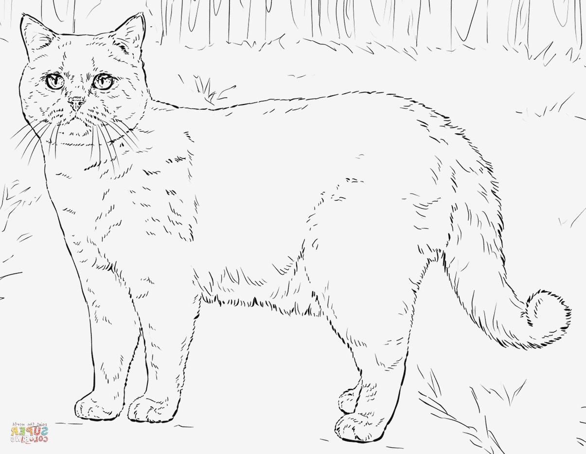 Katzen Bilder Zum Ausmalen Das Beste Von 27 Neu Katzen Ausmalbilder – Malvorlagen Ideen Bild