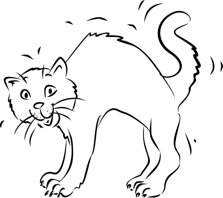 Katzen Bilder Zum Ausmalen Das Beste Von Katzen Ausmalbilder Zum Ausdrucken Genial Katze Mit Buckel Fotografieren