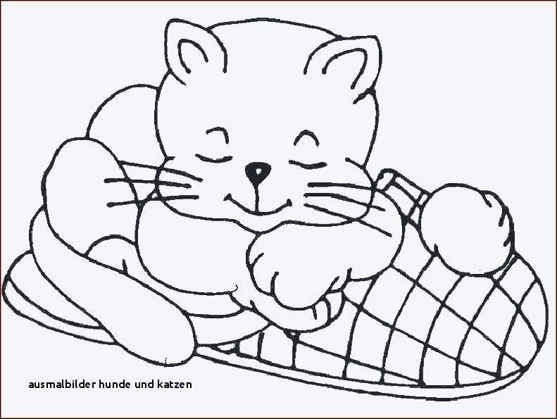 Katzen Bilder Zum Ausmalen Frisch Ausmalbilder Hunde Und Katzen Ausmalbilder Kostenlos Katzen Fotografieren
