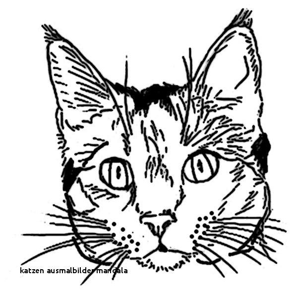 Katzen Bilder Zum Ausmalen Inspirierend Katzen Ausmalbilder Mandala Katze Ausmalbilder 52 Colorprint Sammlung
