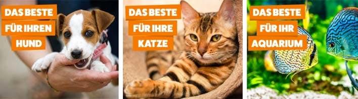 Katzenbilder Zum Ausdrucken Das Beste Von 38 Neu Fotos Von Katzen Bilder Zum Ausdrucken Galerie