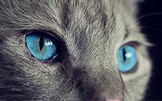 Katzenbilder Zum Ausdrucken Das Beste Von 9 Besten Katzen Bilder Auf Pinterest In 2018 Bilder
