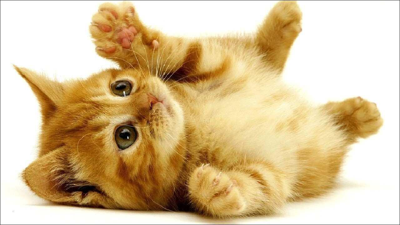 Katzenbilder Zum Ausdrucken Das Beste Von Katze Ausmalbilder Zum Ausdrucken Gemälde Malvorlagen Igel Frisch Stock