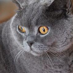 Katzenbilder Zum Ausdrucken Einzigartig 113 Besten Katzen Bilder Auf Pinterest In 2018 Bilder