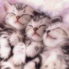 Katzenbilder Zum Ausdrucken Einzigartig 113 Besten Katzen Bilder Auf Pinterest In 2018 Stock