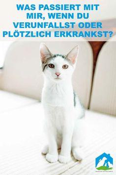 Katzenbilder Zum Ausdrucken Einzigartig 684 Besten Haustier Notfallkarte Bilder Auf Pinterest In 2018 Bilder