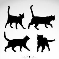 Katzenbilder Zum Ausdrucken Einzigartig 768 Besten Katzen Bilder Auf Pinterest Bilder