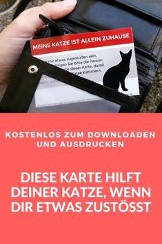 Katzenbilder Zum Ausdrucken Frisch 34 Frisch Fotografie Von Katzen Bilder Zum Ausdrucken Kostenlos Stock