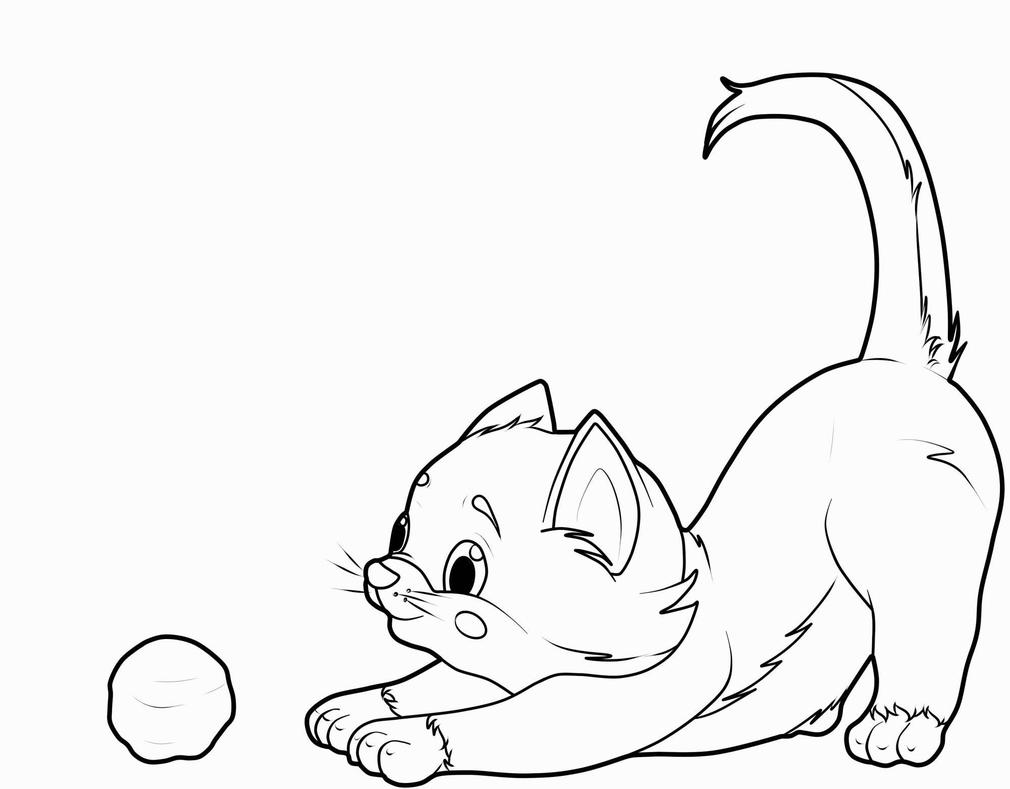 Katzenbilder Zum Ausdrucken Frisch Uranium Jeans Galerie