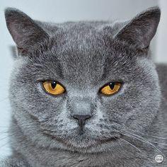 Katzenbilder Zum Ausdrucken Genial 113 Besten Katzen Bilder Auf Pinterest In 2018 Fotografieren