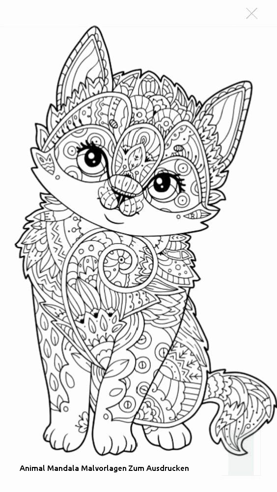 Katzenbilder Zum Ausdrucken Genial 38 Neu Fotos Von Katzen Bilder Zum Ausdrucken Sammlung