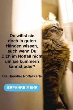 Katzenbilder Zum Ausdrucken Genial 684 Besten Haustier Notfallkarte Bilder Auf Pinterest In 2018 Bilder
