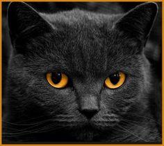 Katzenbilder Zum Ausdrucken Inspirierend 113 Besten Katzen Bilder Auf Pinterest In 2018 Stock